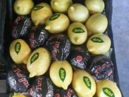 Лимон Киев Доставка Rifat Турция