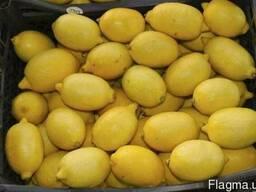 Лимон Єгіпет