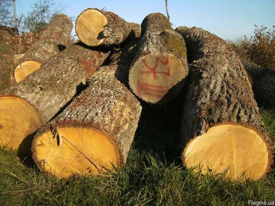 Ліс круглий дуб