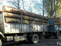 Ліс кругляк сосна , ольха , дуб, береза