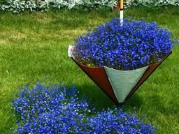 Лобелия с синими, белыми и лиловыми цветами.