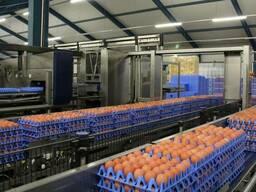 Лотки для яиц Jumbo (65-75 грамм)