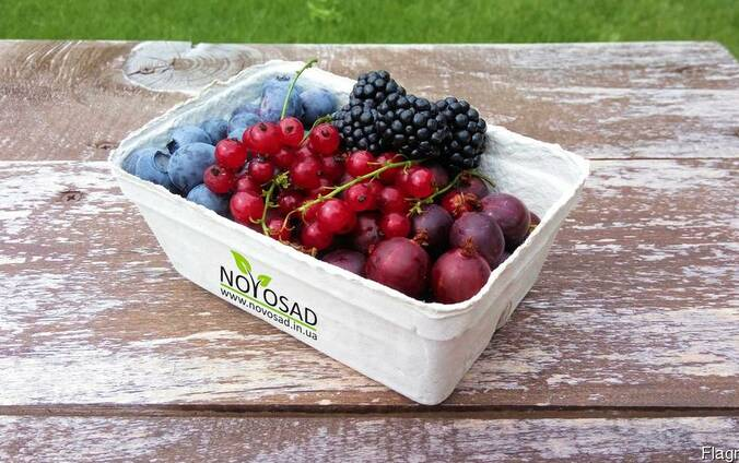 Лотки пинетки для ягод, фруктов, овощей 250г (Германия)