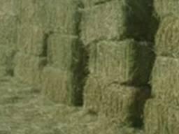Люцерна сено Куплю