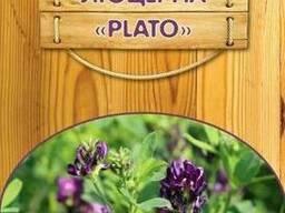 Люцерна Plato (500г)
