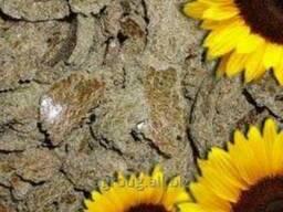 Макуха соняшника