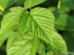 Малина листя