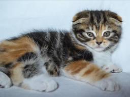Мальвина котенок
