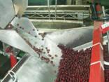 Машина для удаления косточек из вишни, сливы, абрикоса 2600 - фото 3