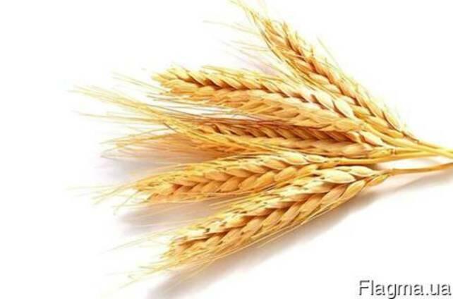 Масла зародышей пшеницы Водорастворимое (Resplanta) Италия