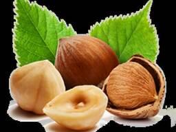 Масло лесного ореха в Крыму
