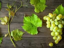 Масло виноградной косточки Базовая РАФ. (Grapeseed Based OIL Refined)