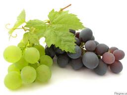 Масло виноградной косточки для домашней косметики в Крыму