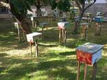 Матки Карника Карпатка 2020 Пчеломатки Бджоломатки - фото 4