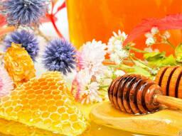 Мед натуральный (1 кг. пет ведро)