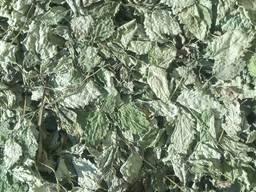 Мелисса сушеная: трава, лист