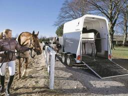 Международные перевозки лошадей и жывотных