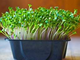 Микрозелень, микрогрин, microgreen - витамины для Вас!