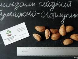 Миндаль сладкий семена (10шт)(насіння мигдаля для саджанців)