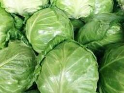Молодая капуста сорт green fresh - фото 2