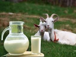 Молоко козье фермерское оптом С доставкой