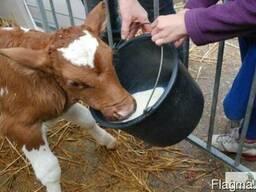 Молоко сухое натур. для телят и поросят. Предстартер!