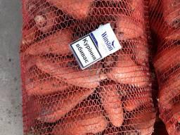 Морковь крупными объёмами оптовая цена 4 грн от 20-ти тонн.