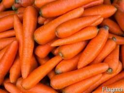 Морковь мытая отборная фасованная одного размера пакет сетка