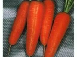 Морковь ( Семена)