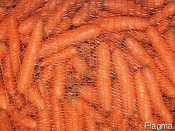 Морква на закладку від виробника