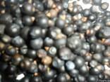 Можжевельник ягода ялівець плоди - фото 1