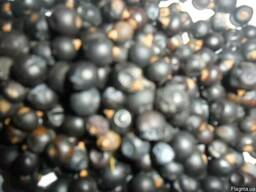 Можжевельник ягода ялівець плоди