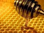 Мёд - фото 1