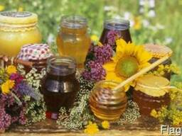 Куплю Мёд актуальная цена!!!