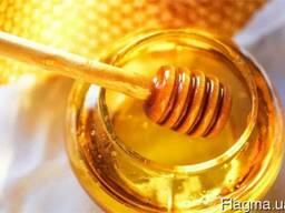 Мёд на экспорт