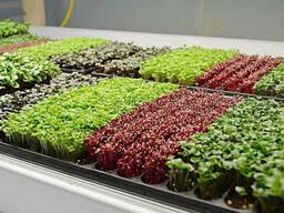 Набор семян микрозелени для проращивания 7 шт