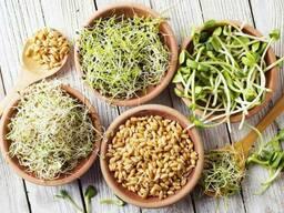 Набор зерен для проращивания органического происхождения 5 видов