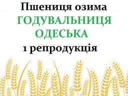 Насіння озимої пшениці Годувальниця Одеська 1 репродукція