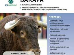 "Семена Свеклы сахарной ""Бакара"" (драже), Sesvanderhave"