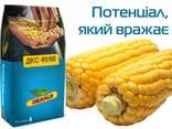Насіння кукурудзи ДКС 4590 ФАО 360 - фото 1