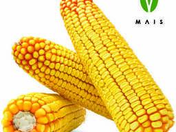 Насіння кукурудзи Марліз (ФАО 280)