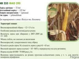 Насiння кукурудзи (семена кукурузы) МВ 255(ФАО 290) Угорщин