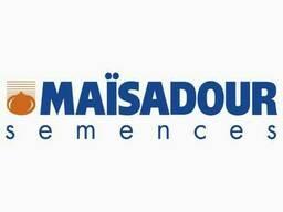 Семена подсолнечника МАС 92 СР (MAS 92) CP от Майсадур