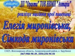 Насіння ярої пшениці, гречки, гороху, овса, ячменю
