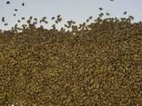 Семена люцерны Немагниченные и магниченные семена люцерны, посевная люцерна, насіння - фото 1