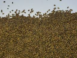Семена люцерны Немагниченные и магниченные семена люцерны, посевная люцерна, насіння