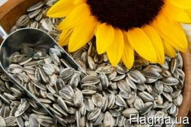 НК_Ададжіо (Clearfield_Cruiser)Семена подсолнечника Syngentа