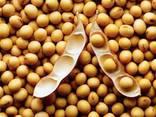 Non-GMO soybeans crop 2019 - photo 1