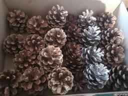 Новогодние сосновые шишки для декора - фото 5