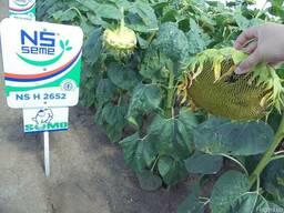 Семена подсолнечника НС Х 2652 экстра под Гранстар